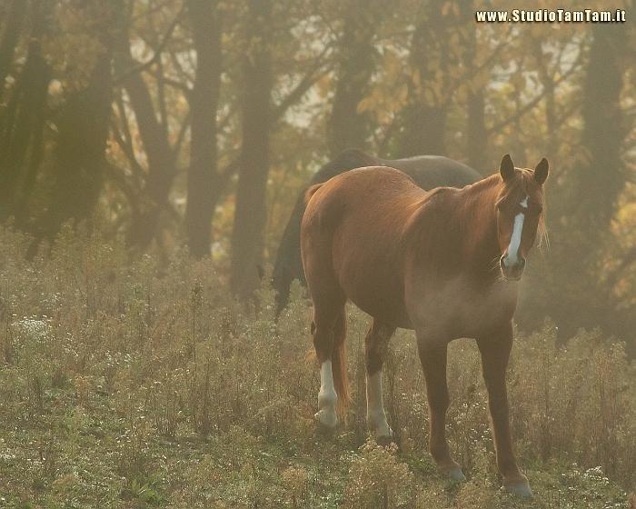 Studio tamtam sfondi per desktop 1280x1024 pixel for Sfondi cavalli gratis